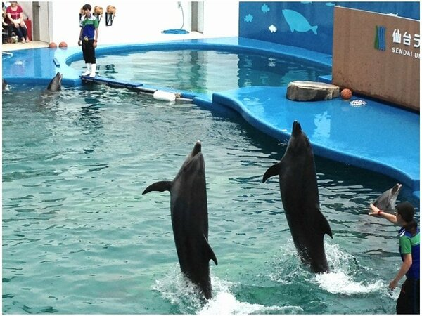 【仙台うみの杜水族館】イルカとアシカが繰り広げるパフォーマンスは見ものです!