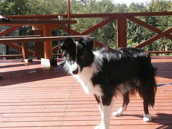 フェリチェの看板犬
