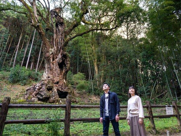 【武雄の大楠】樹齢3,000年を誇る神秘的なご神木。パワースポットとしても有名です。