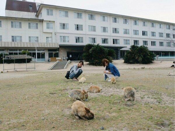 ホテルの前には人懐っこいウサギがたくさん♪