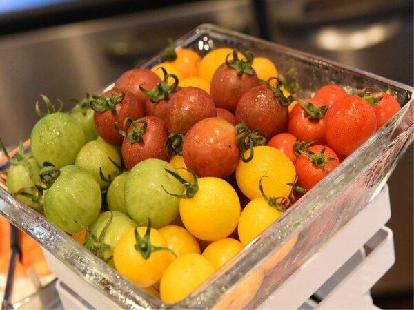 大人気!甘みたっぷりのフルーツトマト。カラフルなとマトの食べ比べはいかがですか?