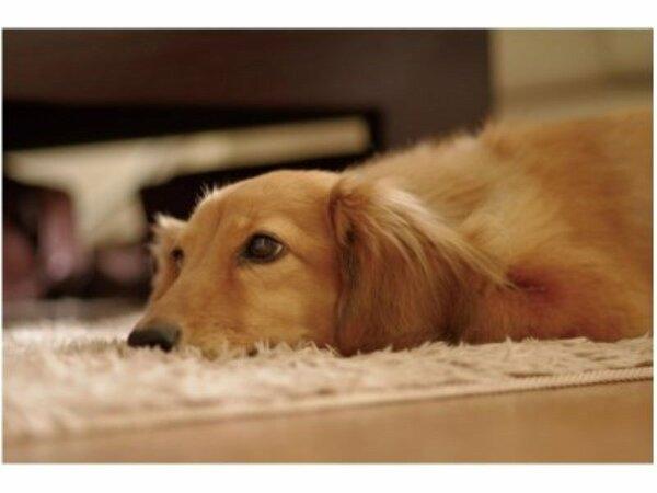 愛犬と遊べるホテルがニューオープン !