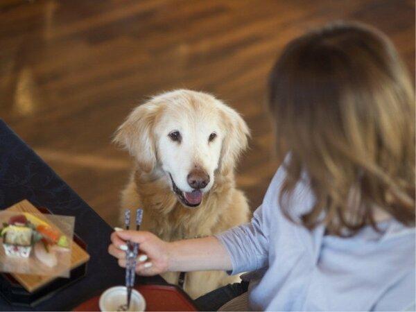 【レストラン】大型犬だってレストラン同伴OK!一緒が嬉しいね♪