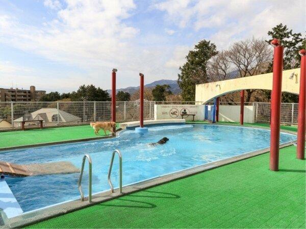 【プール】1年中利用できるわんちゃん専用温水プール