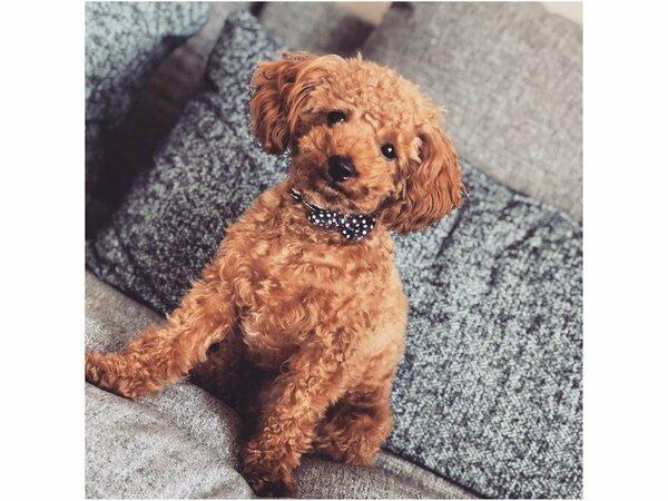 ペットと泊まれる♪☆大型犬・中型犬・小型犬のいずれも受入れOK!