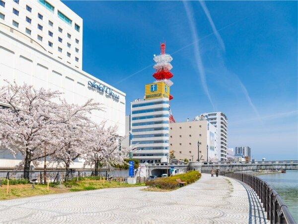 ホテルすぐそばの桜は例年4月上旬から中旬に咲き誇ります