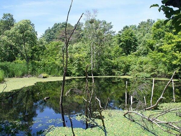 【裏磐梯の湖沼群】水鳥や水生植物をはじめ、四季折々、豊かな生きものたちの営みを楽しむことがでます。