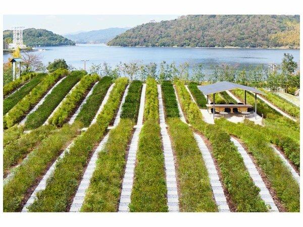 浜松の伝統工芸である遠州綿紬のストライプ柄をイメージし、茶の木とツツジを交互に配置した「つむぎ茶畑」
