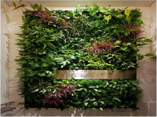南九州初の壁面緑化。必見です!