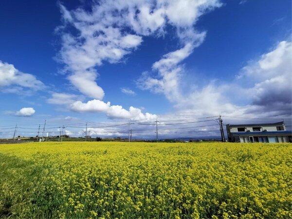 一面の青い空と農場