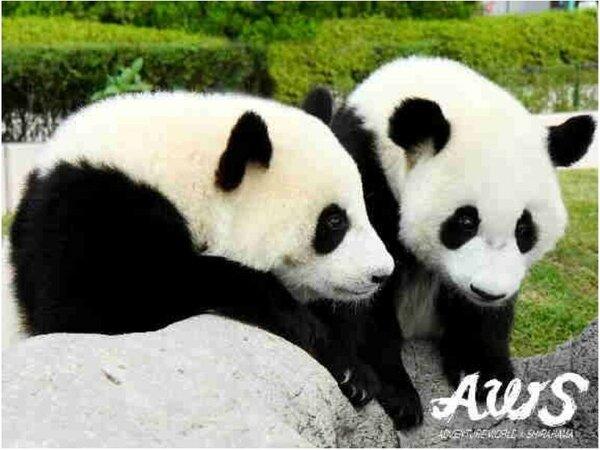 人気のパンダをはじめ、かわいい動物達に子供も大人も釘付け