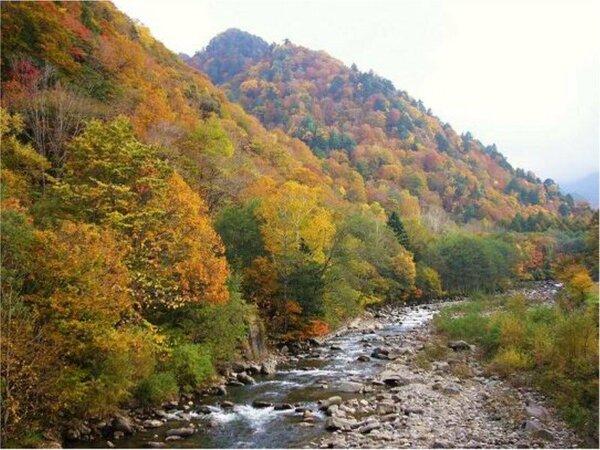 10月中旬頃から山荘周辺は紅葉が始まります。実川と紅葉