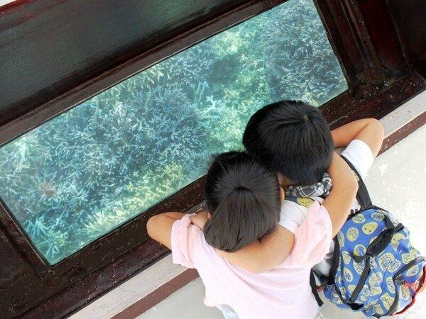 【グラスボート】広い海の中で過ごす生き物たちの世界を覗いてみよう♪