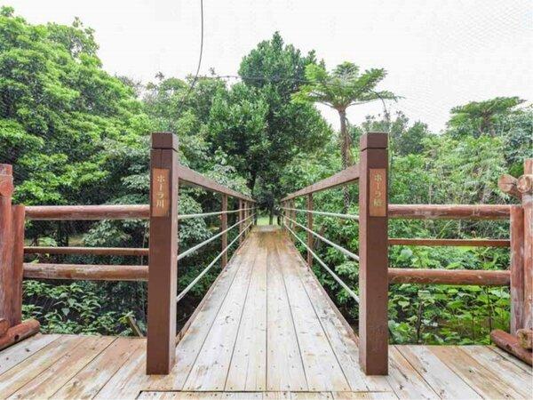 *ジャングルに続く遊歩道