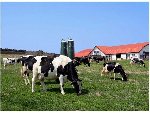 約250haの広大な敷地で様々な動物と触れ合えるマザー牧場